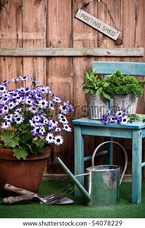 Senetti flower in terracotta pot with garden tools outside the potting shed - stock photo