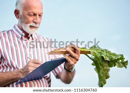 Senior agronomist or farmer measuring sugar beet roots with a ruler and writing data into questionnaire. Organic food production. Low angle view, selective focus on foreground.