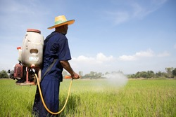 Senior Asian farmer sprayer herbicides on paddy fields. Man working on the rice field Agriculture real in Rural Scene
