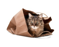 Senior cat sitting inside bag. Shy 15 years old senior cat is looking out of a brown large paper bag after sleeping in it. Long hair tabby cat with green eyes. Selective focus. Isolated on white.
