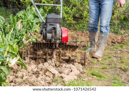 senior farmer gardener working in the garden with rototiller , tiller tractor, cutivator, miiling machine. Permaculture #1071426542