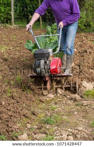 senior farmer gardener working in the garden with rototiller , tiller tractor, cutivator, miiling machine. Permaculture #1071428447
