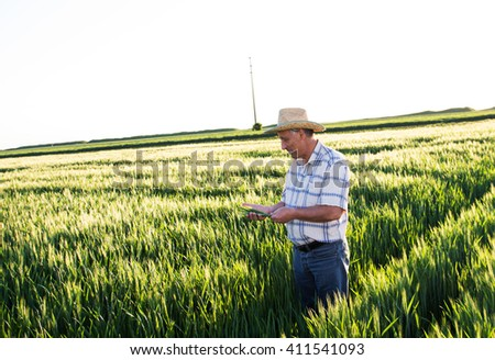 Senior farmer in a field examining wheat crop.
