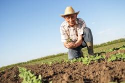 Senior farmer in a field holding crop in nis hands