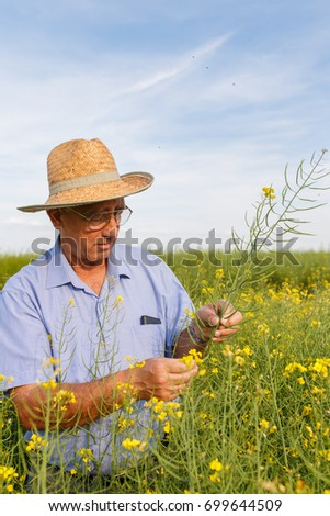 Senior farmer standing in a rapeseed field and examining crop. #699644509