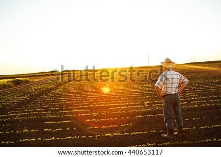 Senior farmer standing in field and looks into the distance