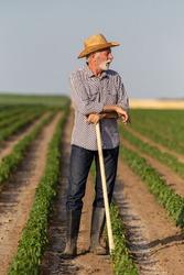 Senior farmer taking break while working in vegetable field. Elderly man wearing straw hat leaning on gardening hoe looking to side.