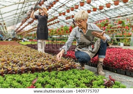 Tapete Senior gardener working in plant nursery and using digital tablet while examining flower.