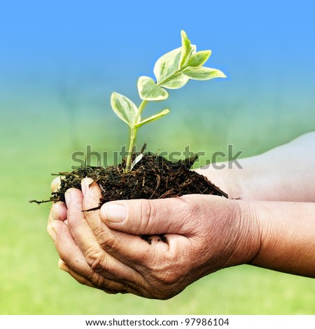 Senior hands holding green small plant new life concept.