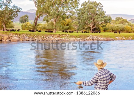 Senior male on holiday fly fishing for trout in the fast flowing Murray River with cows grazing in the background