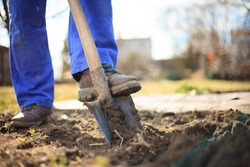 Senior man digging a garden for new plants after winter by spade
