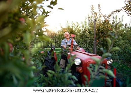 Senior man farmer driving his old retro styled tractor machine through apple fruit orchard. Active lifestyle.