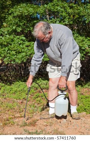 Senior Man Killing Poison Oak and Mountain Misery in the Yard.