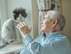 Senior man playing with grey cat sitting on the window. Cozy scene, hygge concept