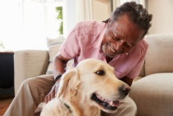 Senior Man Sitting On Sofa At Home With Pet Labrador Dog
