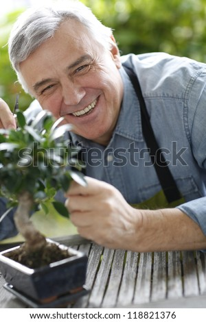 Senior man taking care of bonsai plant