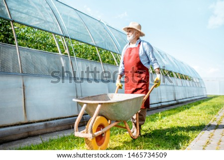 Senior man walking with pushcart on the farmland with greenhouse on the background. Working on a farm during the retirement age