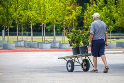 Senior Man wheeling cart with rose plants out of garden center with trees for sale in background - Selective focus
