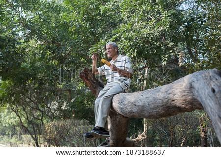 Senior men eating corn cob in the park Foto stock ©
