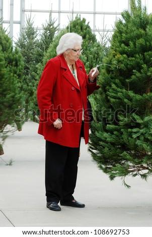 senior shopping for christmas tree