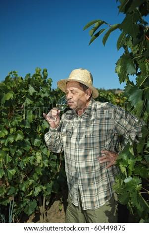 Senior vintner testing wine outdoors in vinery. - stock photo