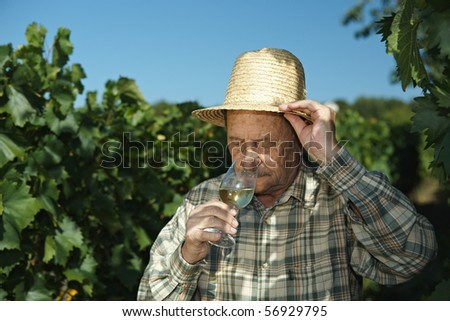 Senior winemaker testing wine outdoors in vinery. - stock photo