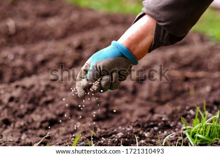 Senior woman applying fertilizer plant food to soil for vegetable and flower garden. Fertilizer and agriculture industry, development, economy and Investment growth concept. Photo stock ©