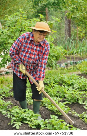 Senior woman gardening - hoeing potatoes - stock photo