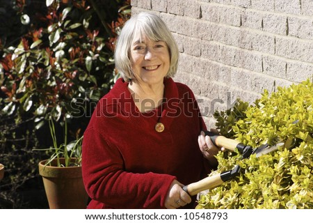 Senior woman gardening with shears in a domestic garden.