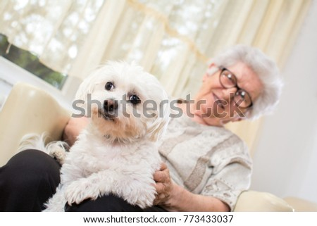 Senior woman holding Maltese dog in her lap. Focus on dog.