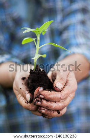 Senior woman holding small sunflower plant, shallow dof