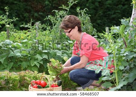 Senior woman picking vegetables in kitchen garden #58468507