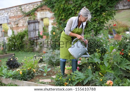 Senior woman watering vegetable garden