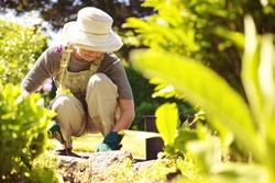 Senior woman with gardening tool working in her backyard garden