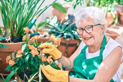 Senior woman with grey hair wearing gloves and gardener apron gardening the plants at home