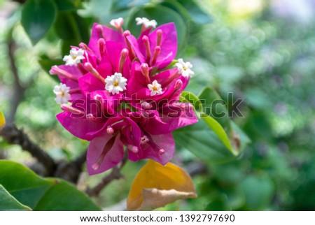 sensitive focus of Fresh pink paper flowers