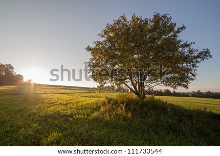 Separate tree in the field on sunrise