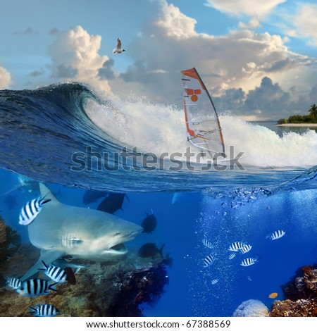 Separated image. Oceanview with breaking surfing wave and professional windsurfer on a board  under sail and angry hungry bull-shark swimming underwater over coral reef