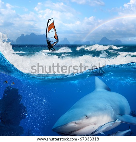 Separated image. Story about ocean and windsurfer on a board  under sail and angry hungry bull-shark swimming underwater