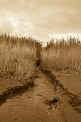 Sepia coloured water channel carved in the sand dunes of a local beach