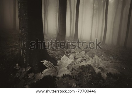 sepia forest with fog and fern in foreground