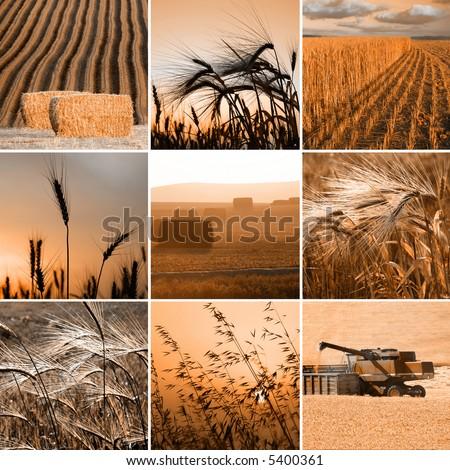 sepia harvest photos collection - stock photo