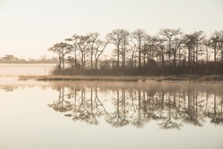 Sepia image of a morning in autumn by the lake at sunrise, orange light covered with fog and pine trees reflect in the water at Phu Kradueng, Thailand