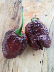 Sepia Reaper an extremely hot chilly pepper that is great in combination with meat and cheese and a good glass of red wine
