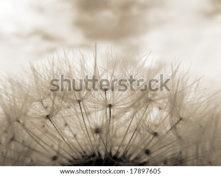 Sepia toned close-up of dandelion clock against sky