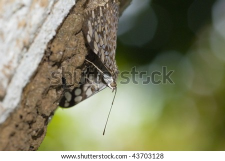 Sequence of butterfly camouflaged on tree .
