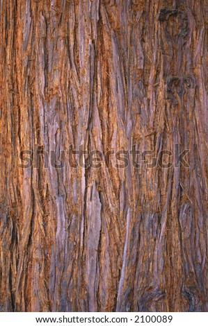 Sequoia bark background, texture