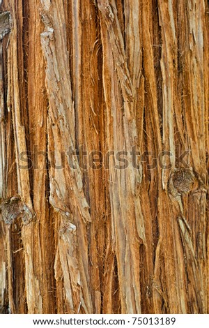 Sequoia bark texture, abstract natural background