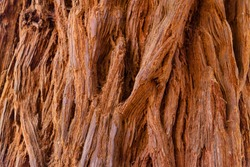Sequoia cortex texture background. Redwood wallpapers and design elements.