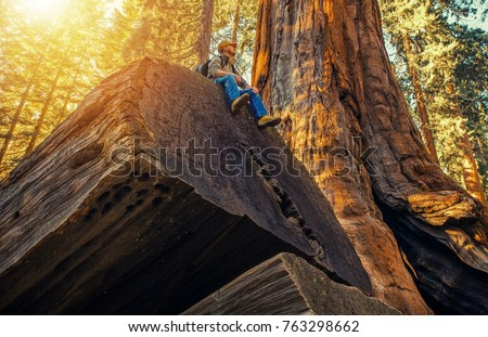 Sequoia Forest Hiker. Caucasian Men Seating on Ancient Fallen Sequoia Tree Log. Exploring Kings Canyon and Sequoia National Parks in California, United States of America. #763298662